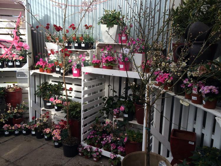 The Garden Centre Blog - Fantastic Plantaria - Ferndale Garden Centre 1