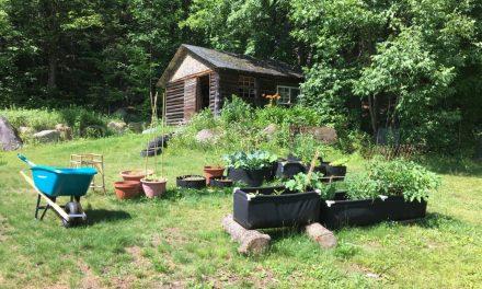 The Beginner Gardener: Winging it