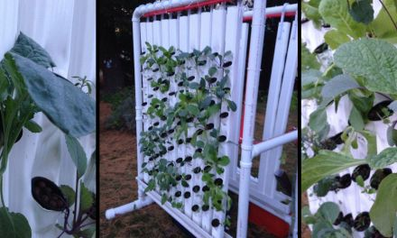 DIY Indoor Vertical Farm