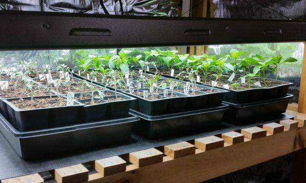 Best Seed Starting Method Yet