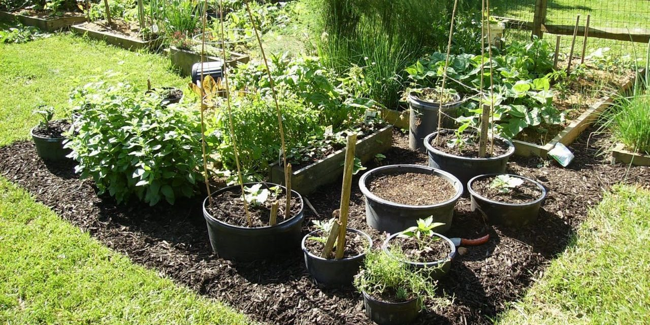 Better container vegetable gardening garden culture magazine - Soil for container vegetable gardening ...