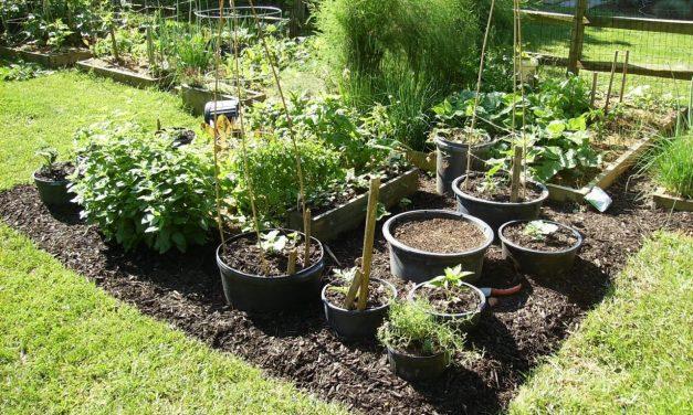 Better Container Vegetable Gardening