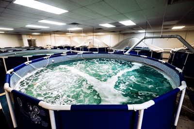 Biofloc Saltwater Aquaponics Indoor Shrimp Farming in Urban Greenville, SC