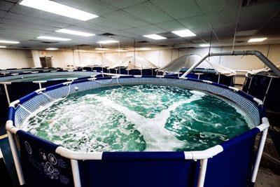 Biofloc Indoor Shrimp Farming in Urban Greenville, SC