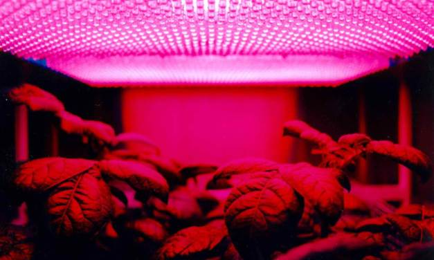 Are LEDs Cutting Edge Grow Lights?