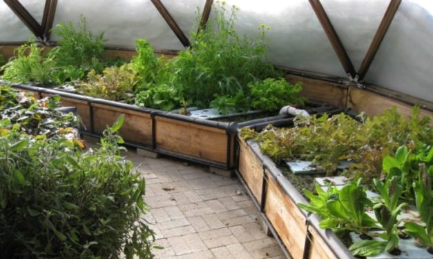 Build Your Own Geodesic Greenhouse