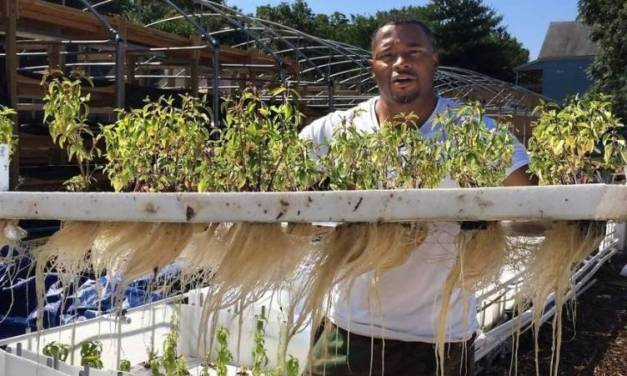 Aquaponics: Change Grows in the Hood