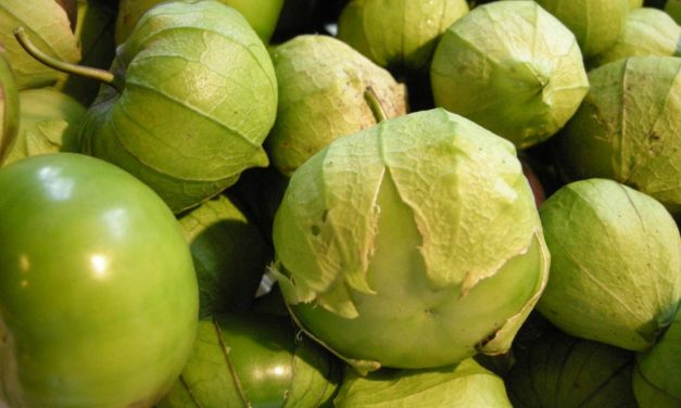 Bug Battles: What's Eating My Tomatillos?