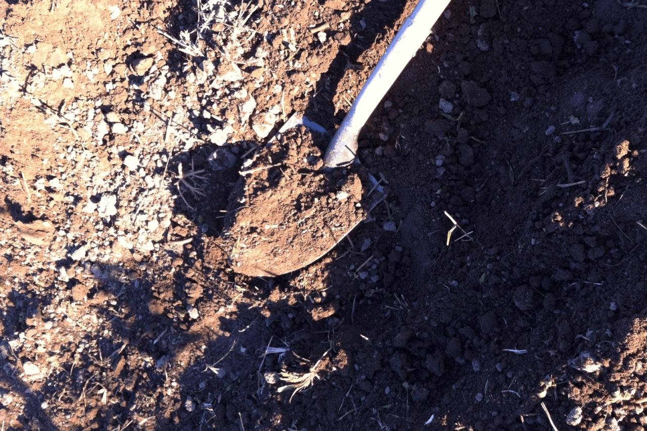 Is Garden Soil Testing Important?