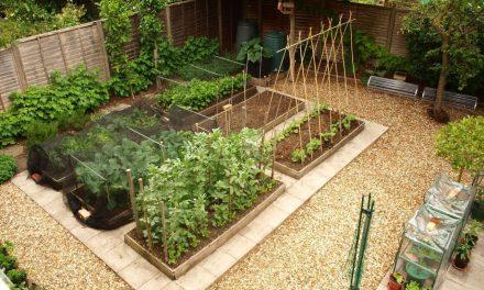 Experts Report Gardening Health Benefits