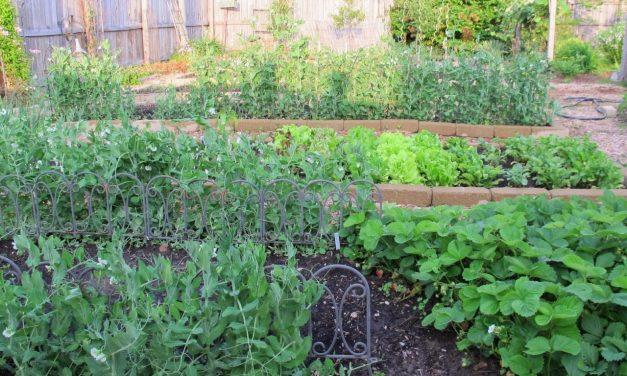 Good Garden Location Tips