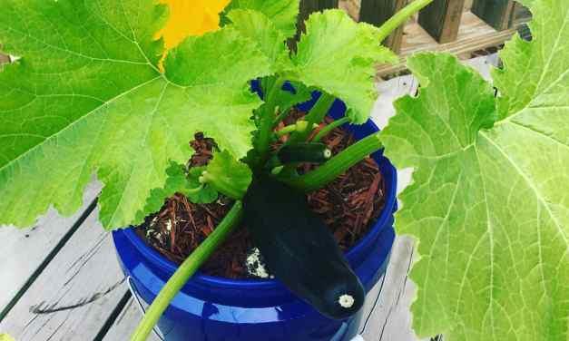 Meet GroBucket: Inexpensive Self-Watering Planter