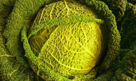 Grow Your Own Cabbage