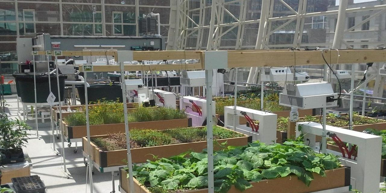 University Gardens that Give Back by Growing