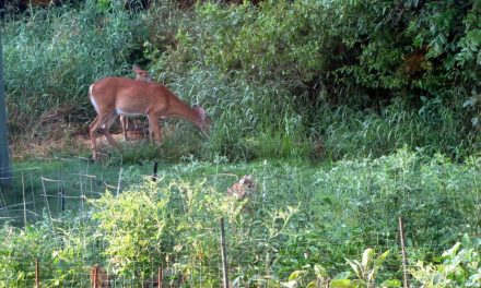 Keeping Deer Out of The Garden