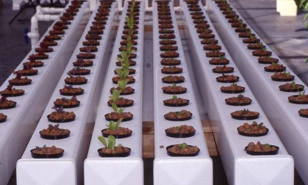 What's the Best Hydroponics System?