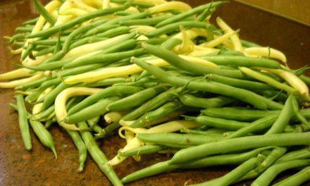 Extend Your Harvest's Freshness