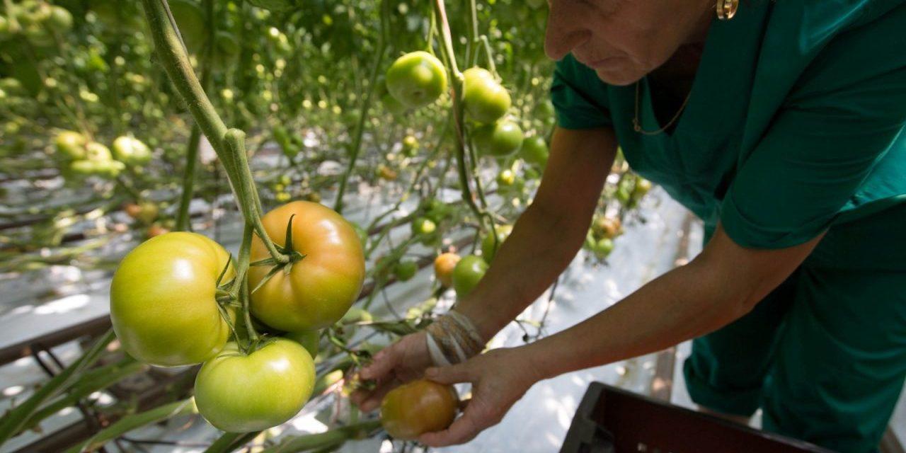 Putin Grows Organic Indoor Farming