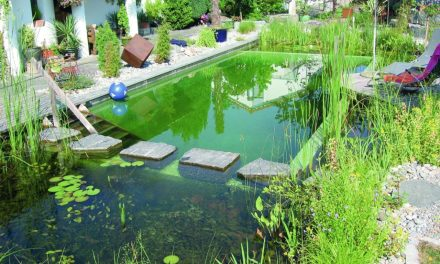 Natural Swimming Pools: Organic Habitat
