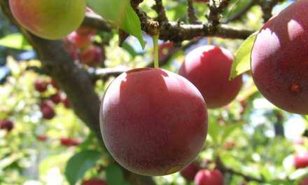 Start Your Own Fruit Trees & Bushes