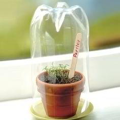 Coke Bottle Seed Starting Dome