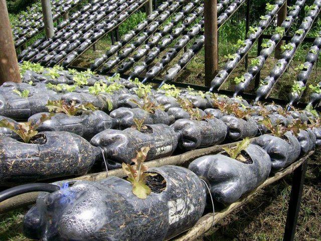 Pop Bottle Hydro Farm