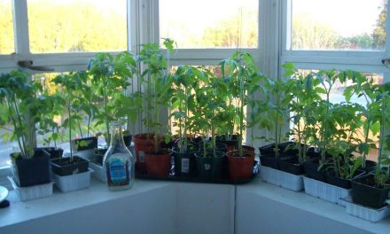 Are You Starting Seeds That Are Really Heirloom Varieties?