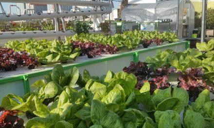 Growing Lettuce Cheap Hydroponics Diy Garden Culture Magazine
