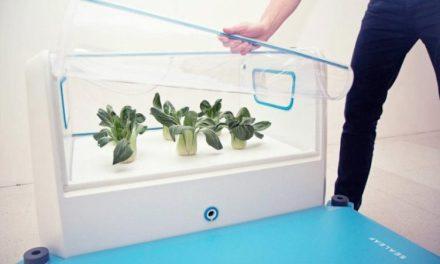 Growing Food On Water