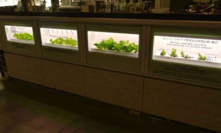Hydroponic Gardens as Mainstream Kitchen Appliances