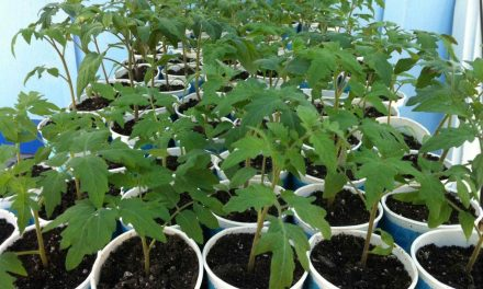 How To Transplant for the Indoor Garden