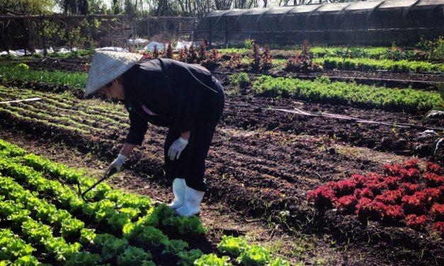 Urban Farming Cooperatives