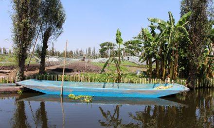 Chinampas: Urban Farming Returns to Mexico City