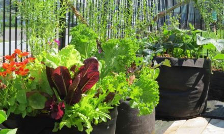 Smart Planting in Fabric Pots