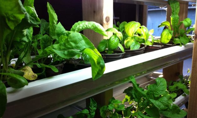 The Next Step In Sustainable Aquaponics