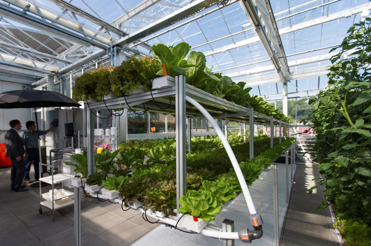 Aquaponics Europe S Largest Urban Farm