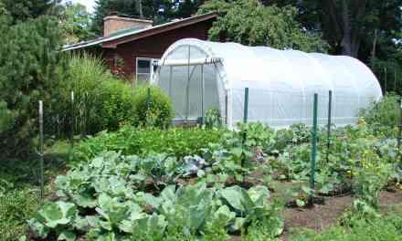 Vegetable Garden Layout Mistakes to Avoid