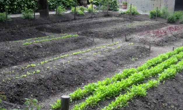 What Is Fertilizer, Anyway? … Part 1