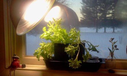 Windowsill Garden Results
