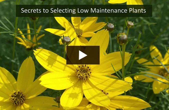 Top 21 Low Maintenance Plants For Your Garden Garden Design