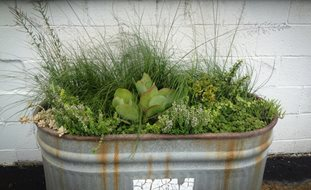 Container Gardening Ideas Garden Design