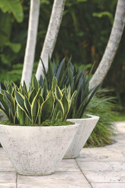 Trouble Free Gardening With Sansevierias Garden Design