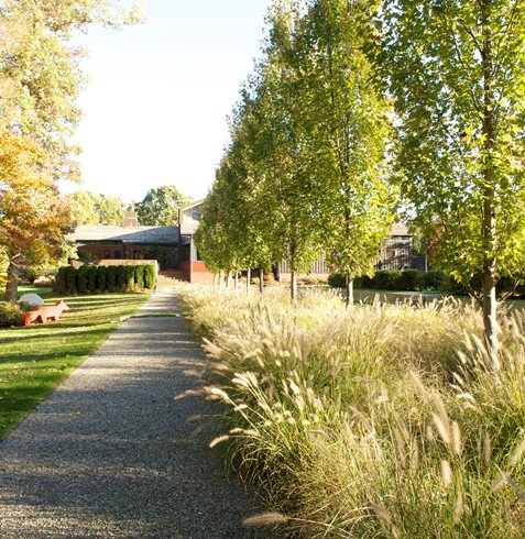 garden trees design