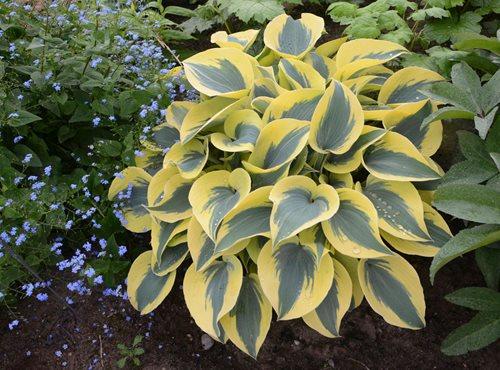 september gardening checklist
