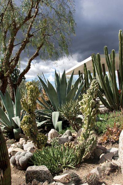 waterwise cactus garden