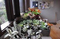 Decorating With Succulents - Gallery | Garden Design