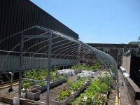 Vegetable Roof Garden - Gallery   Garden Design