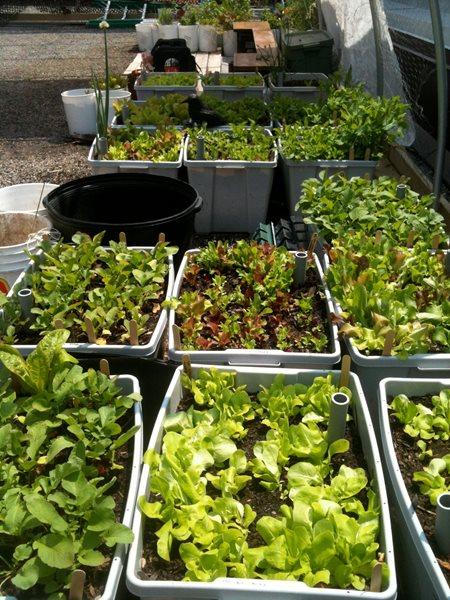 Vegetable Roof Garden Gallery Garden Design