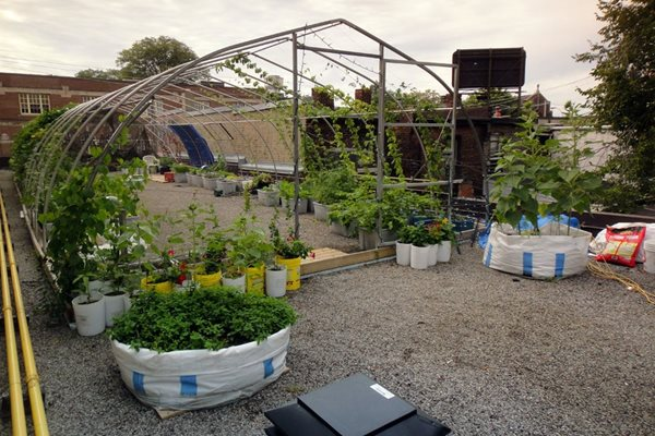 Vegetable Roof Garden Gallery Garden Design