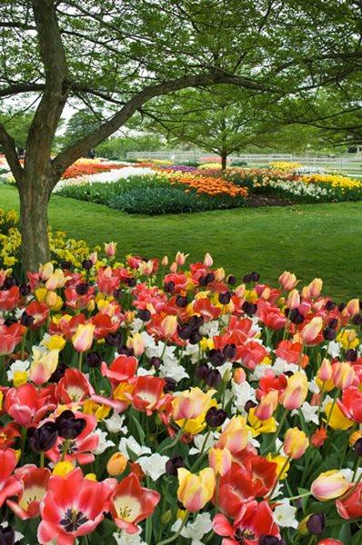 Bulb Garden Spring Bulb Garden Ideas Pictures Remodel And Decor